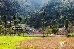 Скачут дальше, простые дома, зацветая деревья цветков персика, плато утеса куда страна Ha Giang, Вьетнама самая северная Стоковая Фотография
