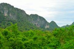 Скала в зеленом лесе Стоковое фото RF