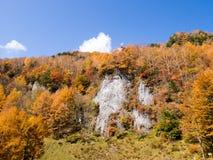Скала заполнила с листьями осени с высокими деревьями и голубым небом как предпосылка Стоковые Изображения RF