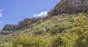 Скала известняка весной Стоковое Фото