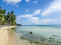 Скалистая береговая линия с пальмами Стоковое фото RF