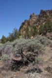 Скалистая зига риолита Стоковые Изображения RF