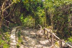 Скалистая дорога среди леса стоковое изображение rf