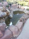 Скалистая статуя воды Стоковое Изображение RF
