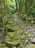 Скалистая тропа в влажном субтропическом зеленом лесе Азорских островах, Portuga Стоковые Изображения