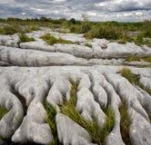 Скалистый ландшафт Burren в графстве Кларе, Ирландии Стоковые Изображения RF
