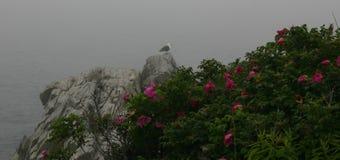 Скалистый берег гавани бара, Мейна Стоковые Фотографии RF