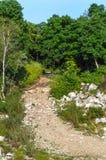 Скалистый водить дороги леса Стоковое Изображение
