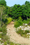 Скалистый водить дороги леса Стоковая Фотография RF