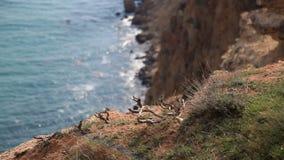 Скалистый наклон на предпосылку моря видеоматериал