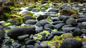 Скалистый пляж Новой Зеландии стоковые изображения