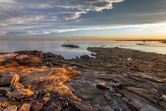 Скалистый пляж с золотой травой на заходе солнца Стоковые Изображения