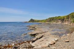 Скалистый пляж с Headland и пеликаном Стоковое Фото