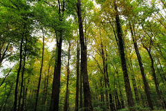 Скалистый сочный зеленый большой лес закоптелой горы Стоковая Фотография