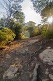 Скалистый след в лесе Ibiza, Испании Стоковые Изображения