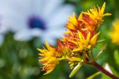 Скалистый цветок Стоковая Фотография RF