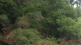 Скалы с пещерами и деревьями акции видеоматериалы