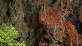 Скалы с пещерами и деревьями сток-видео