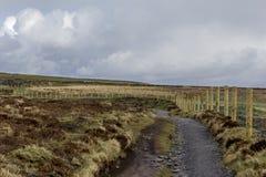 Скалы тропки Moher в Ирландии Стоковые Изображения RF