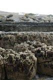 Скалы Fanore стоковое изображение rf