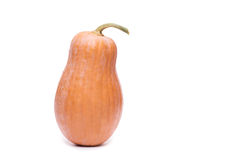 Сквош тыквы изолированный на белой предпосылке Стоковая Фотография