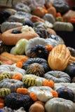 сквош тыкв gourd урожая Стоковое Изображение RF