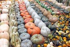 сквош тыкв gourds Стоковая Фотография