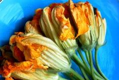 сквош цветений Стоковое Фото