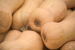 сквош butternut стоковое изображение rf