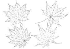 Скелетные листья выровняли предпосылку дизайна и картины лист черным по белому бесплатная иллюстрация
