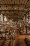 Скелеты животных в огромной зале в галерее палеонтологии и сравнительной анатомии на Париже Стоковая Фотография RF