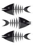скелеты рыб Стоковые Фотографии RF