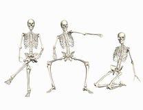 скелеты Стоковое Изображение