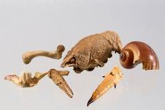 скелеты Стоковые Фото
