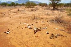 Скелет буйвола в саванне Tsavo восточной Стоковые Изображения