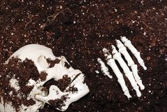 скелет грязи стоковые изображения rf