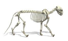 скелет кота иллюстрация штока