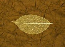 скелет листового золота Стоковые Фото