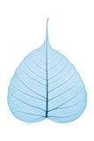 скелет листьев Стоковая Фотография