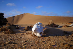 скелет Намибии свободного полета Стоковое Изображение RF