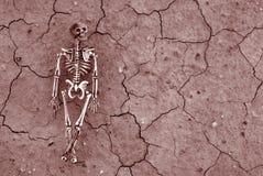 скелет пустыни предпосылки Стоковые Изображения