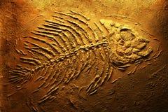скелет piranha Стоковые Фото