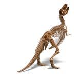 скелет t rex Стоковое Изображение RF