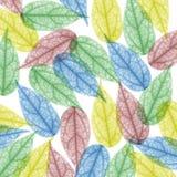 скелет x луча листьев цвета предпосылки Стоковое Изображение RF
