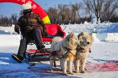Скелетоны собаки на снежке стоковое изображение