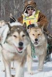 Скелетон участвуя в гонке Beringia собаки Камчатки весьма Россия, Дальний восток Стоковые Изображения RF