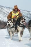 Скелетон участвуя в гонке Beringia собаки Камчатки весьма Русское Дальний Восток Стоковое Фото