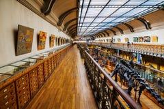 Скелеты животных в галерее палеонтологии и сравнительной анатомии в Париже Стоковое Изображение RF