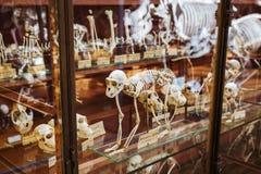 Скелеты животных в галерее палеонтологии и сравнительной анатомии в Париже Стоковое Фото