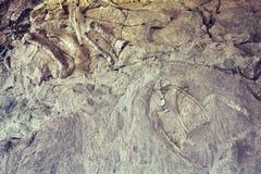 Скелеты динозавра в национальном монументе динозавра, Юте, США Стоковое Изображение RF